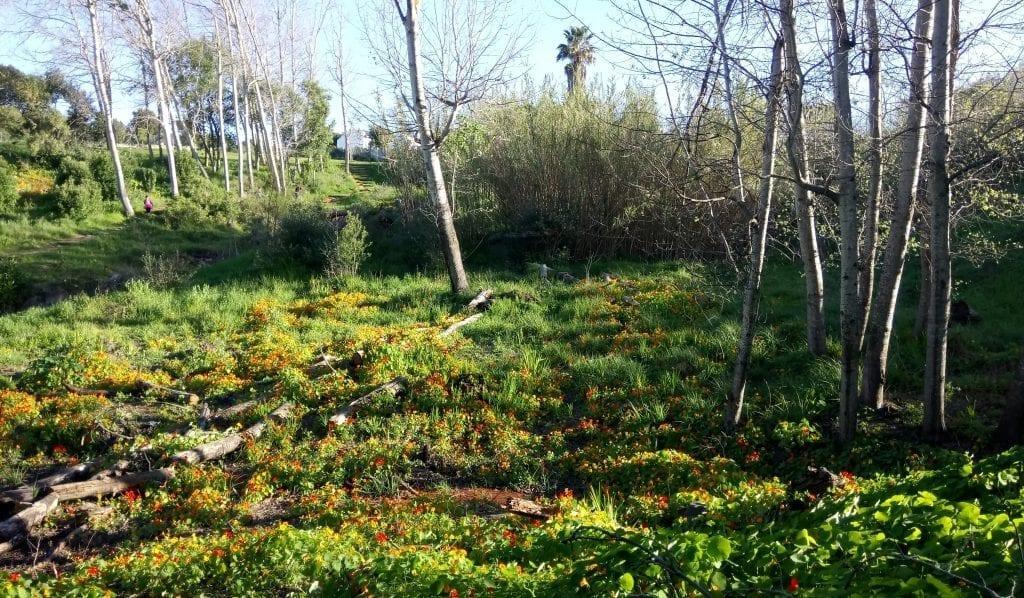 majik-forest-bellville