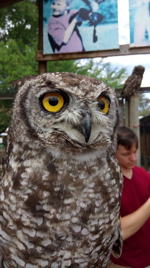 eagle-encounters-stellenbosch
