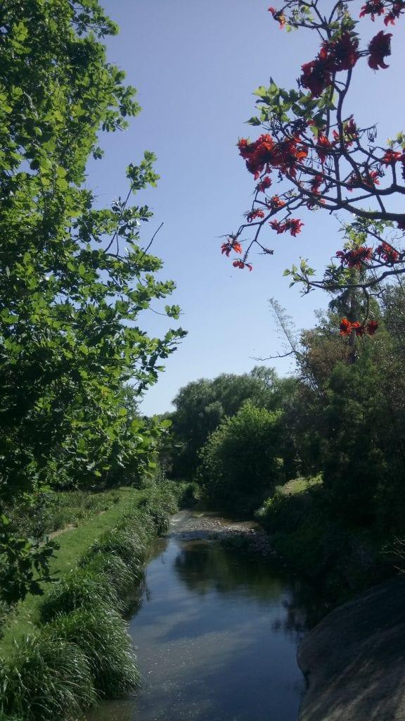 gardens-to-explore-year-round-near-the-cape-winelands-spier-river-walk