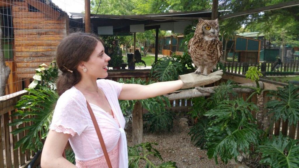 eagle-encounters-spier-wine-farm-best-travel-experiences