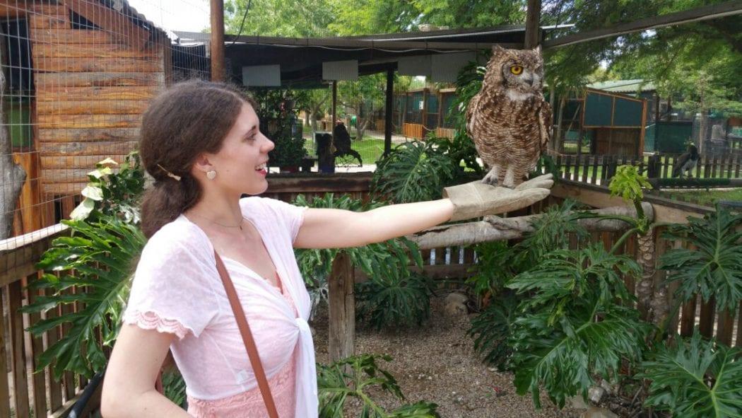 eagle-encounters-spier