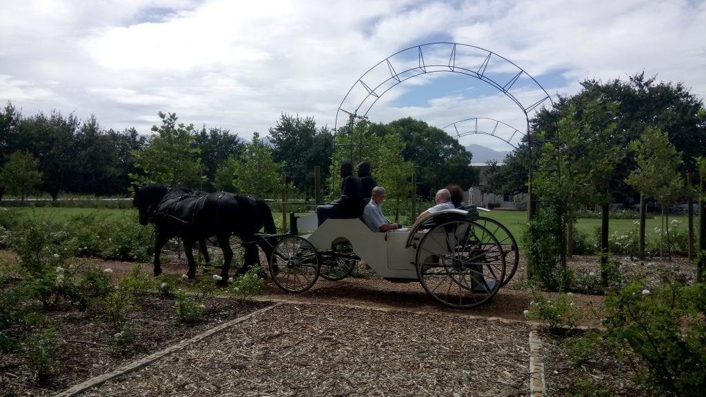 carriage-ride-franschhoek-wine-valley