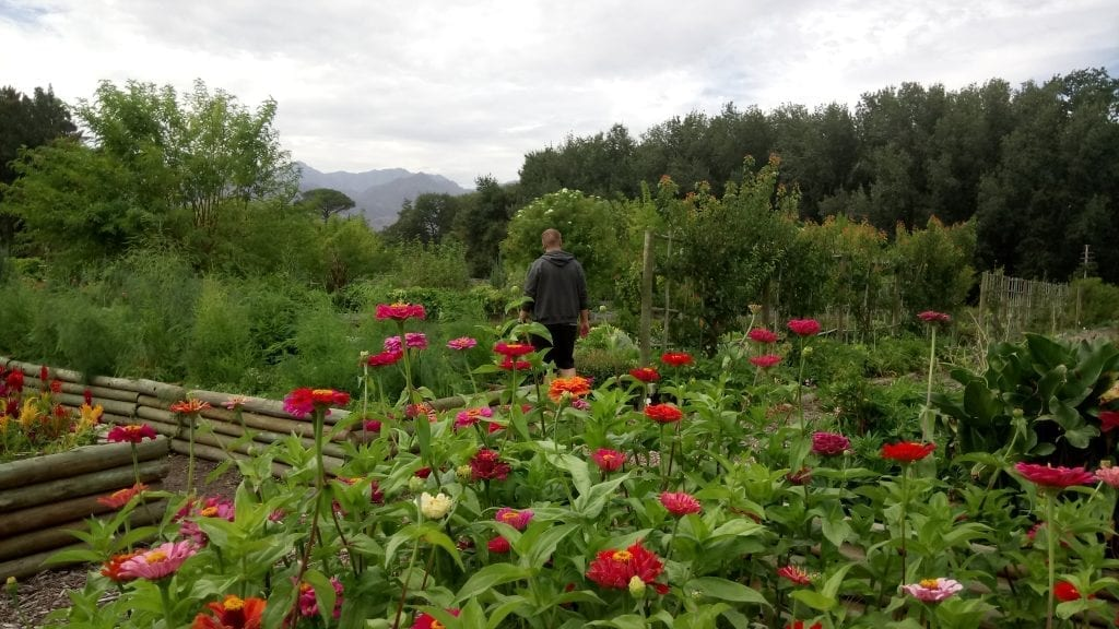 food-garden-boschendal