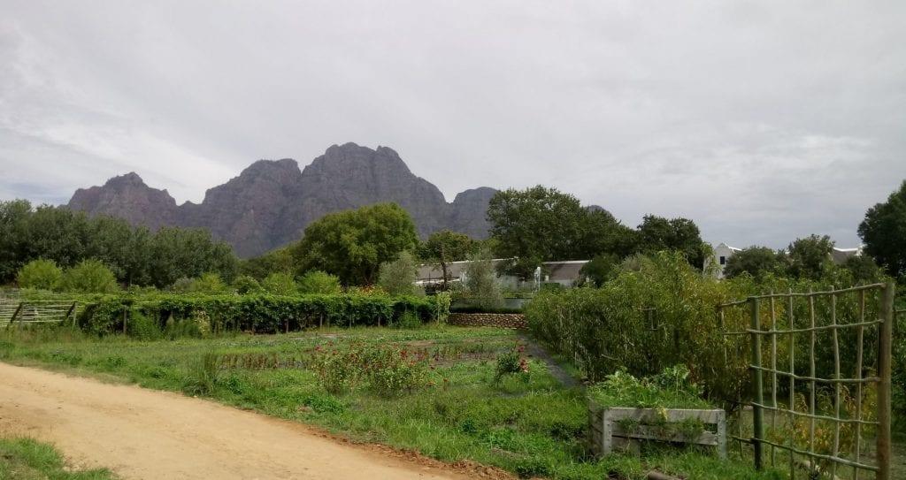 werf-food-garden