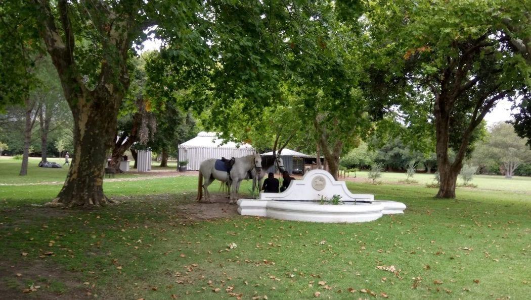boschendal-pony-rides