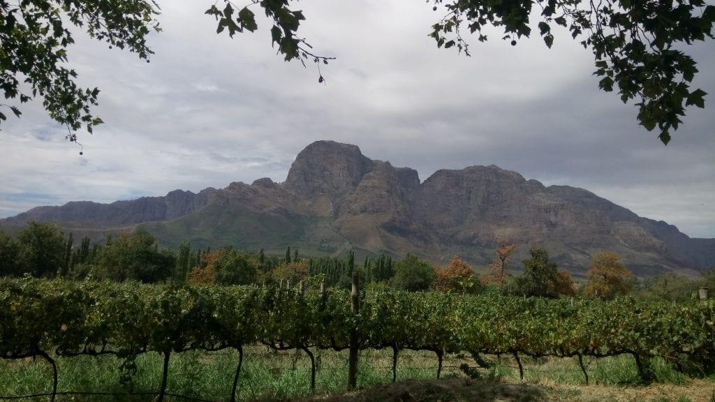 boschendal-wine-estate-vineyards