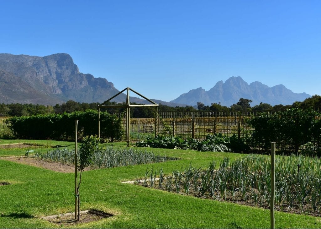 franschhoek-beer-co-organic-garden