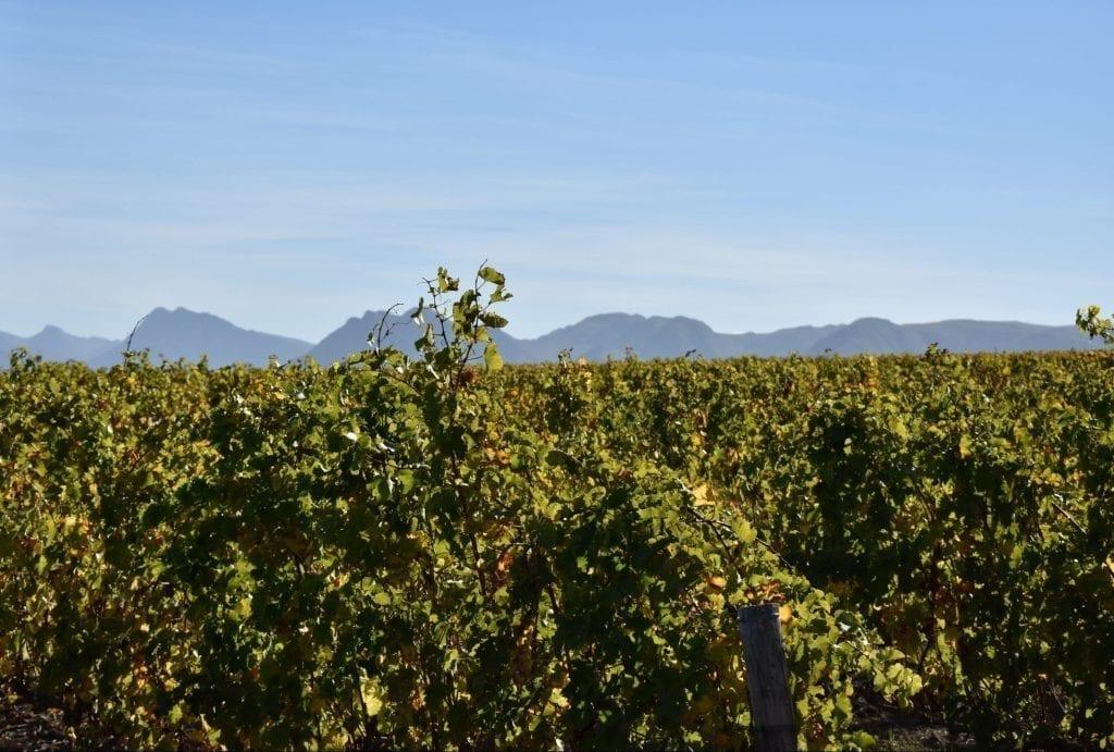 benguela-cove-wine-estate-vineyard-safari-tour