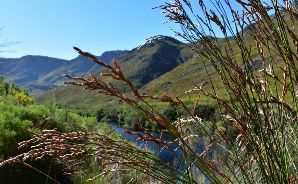 palmiet-river-trail-hike