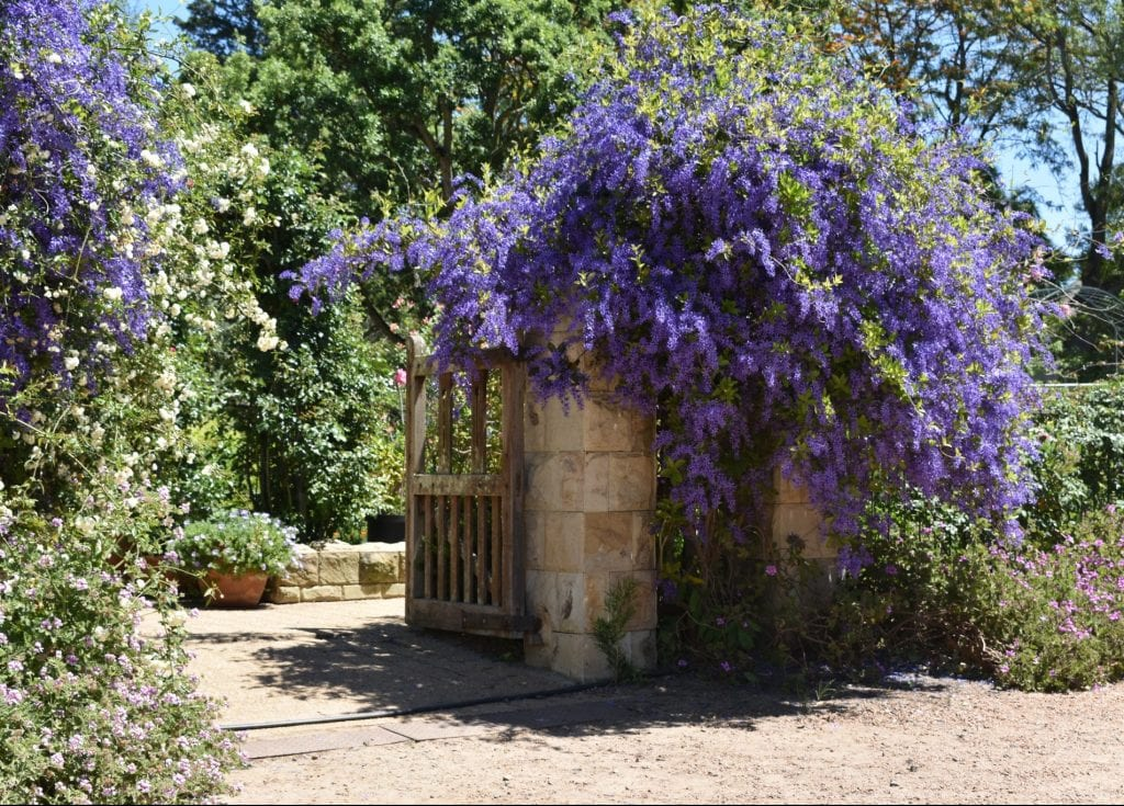 avondale-open-garden-cape-town-south-africa