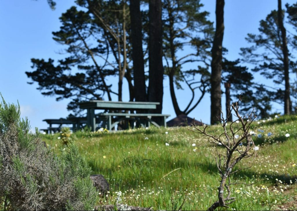 tygerberg-nature-reserve-picnic-areas