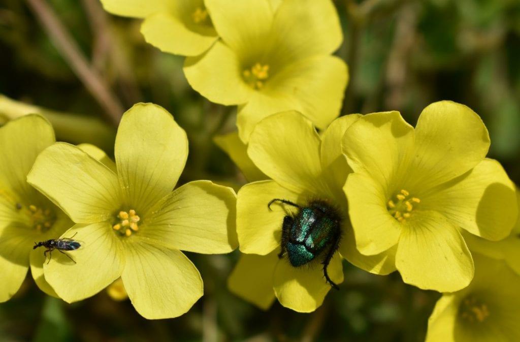 tygerberg-nature-reserve-durbanville