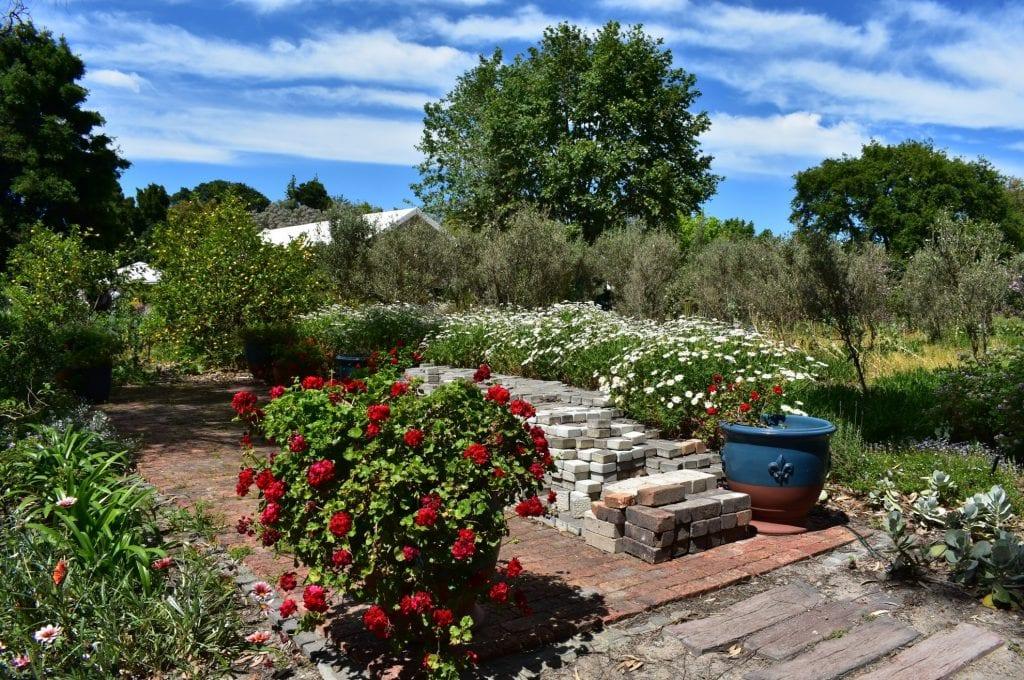 avondale-open-garden-ronelle-shuttleworth