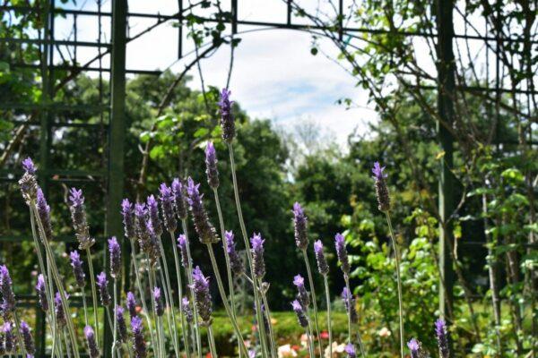 avondale-open-garden