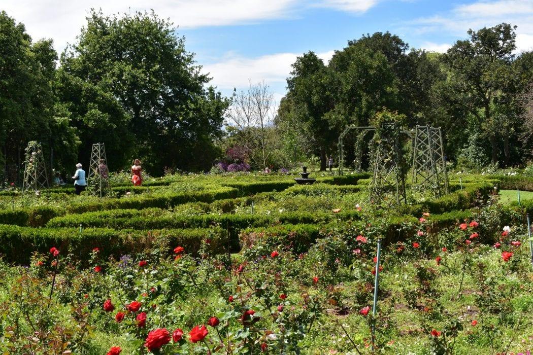 avondale-rose-garden-durbanville