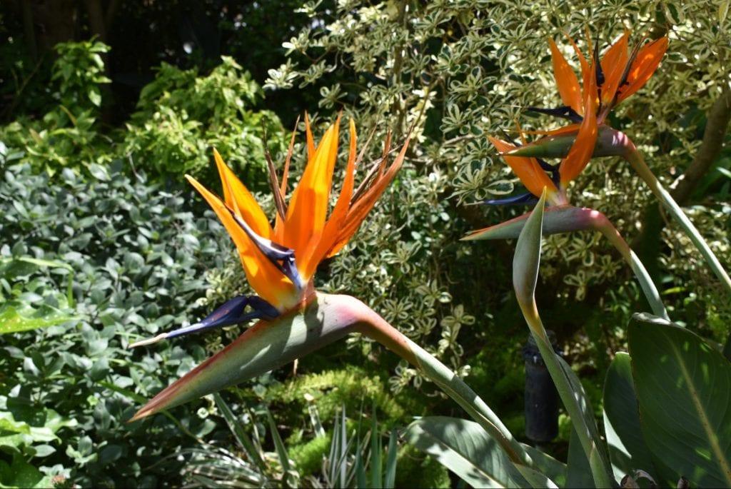 flower-avondale-open-garden-cape-town