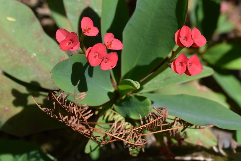 avondale-flower