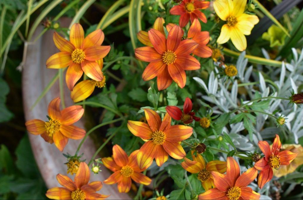 pot-plant-avondale-garden