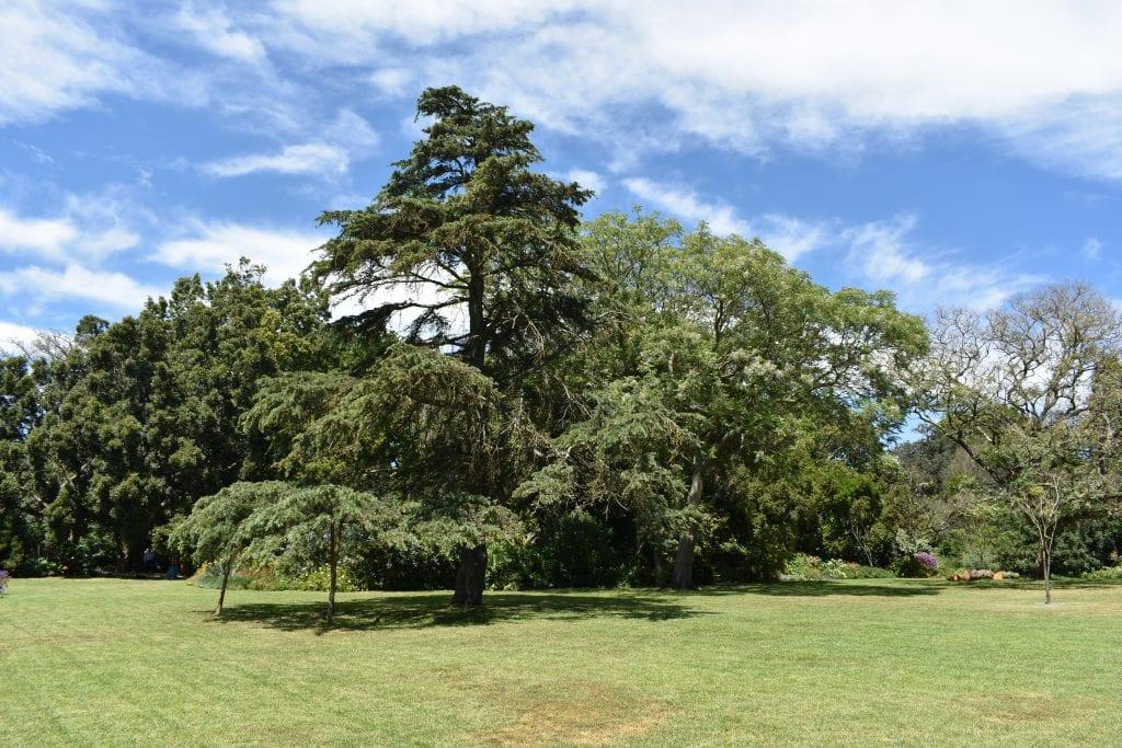 avondale-open-garden-tree