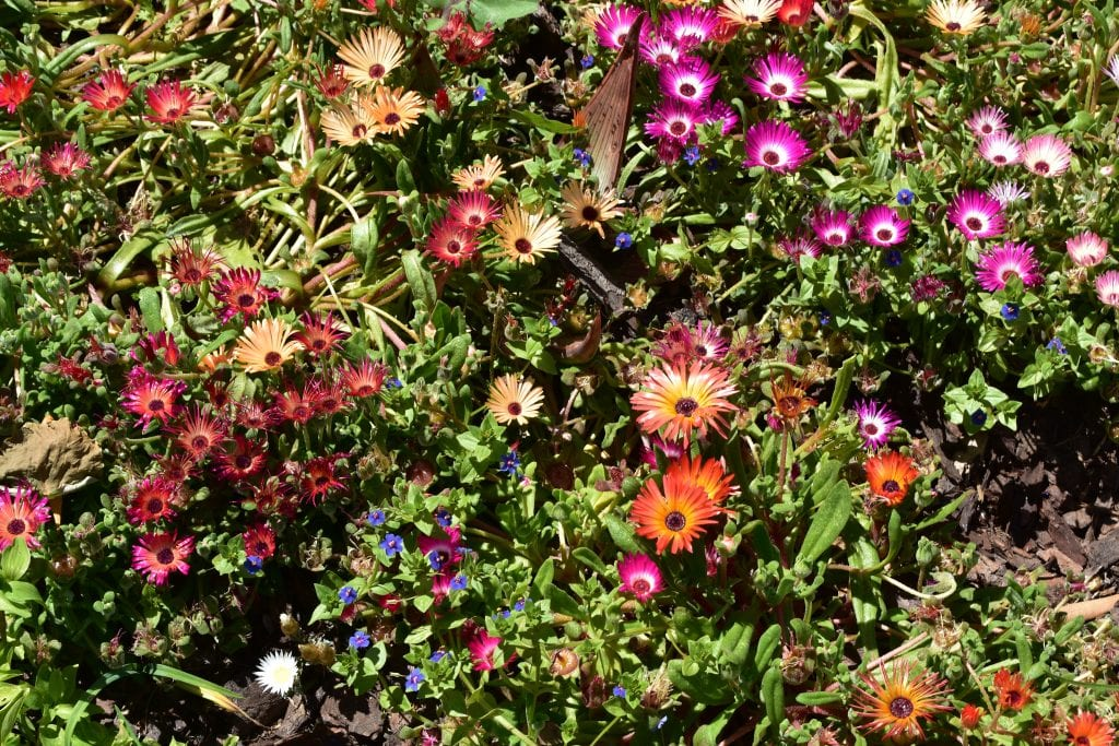 avondale-wild-flowers