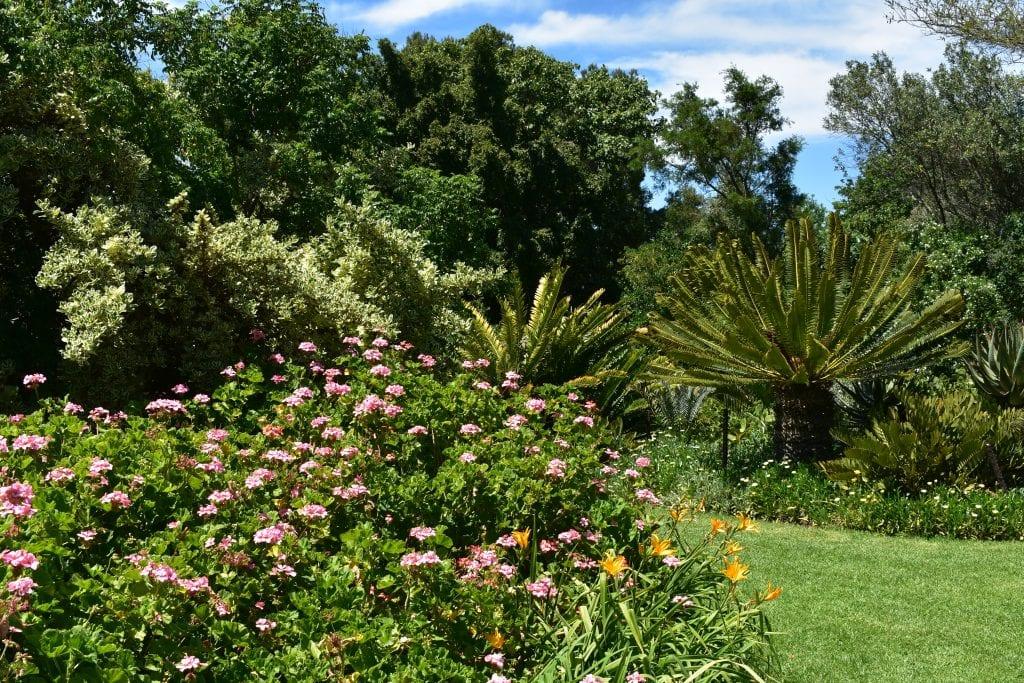 avondale-garden-cape-town