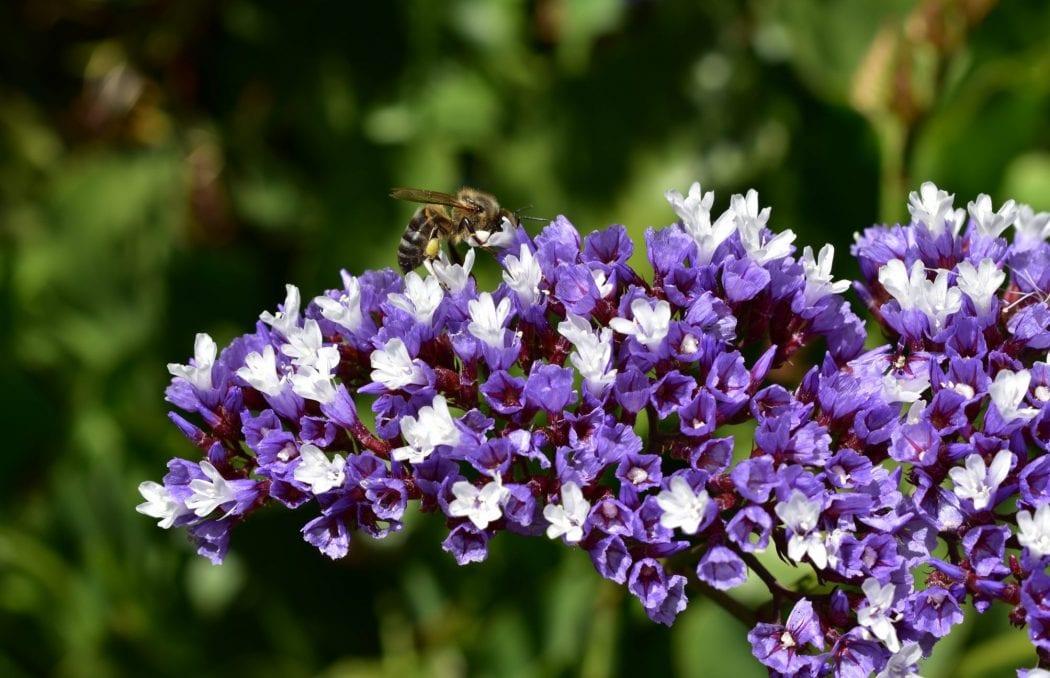 bee-avondale-garden-durbanville