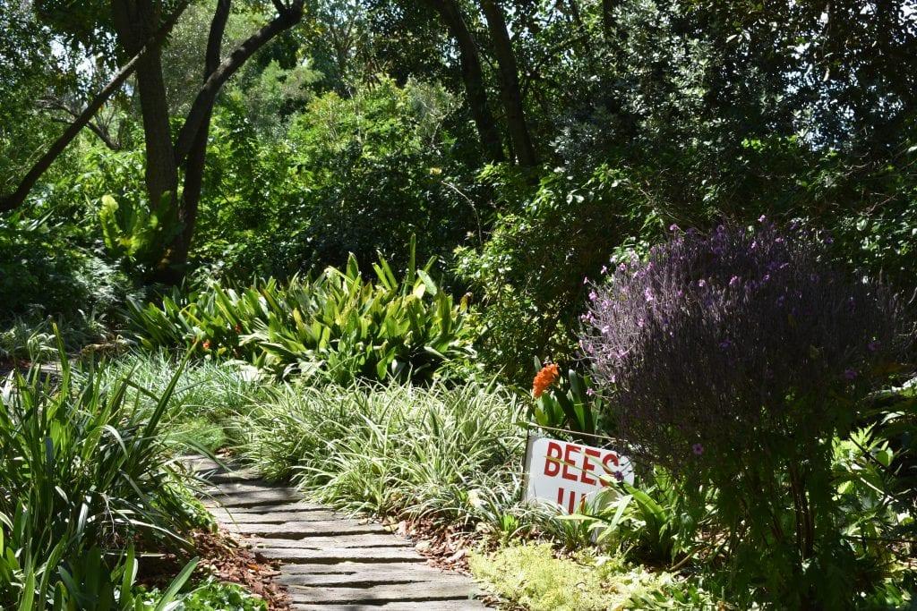 avondale-cape-town-garden