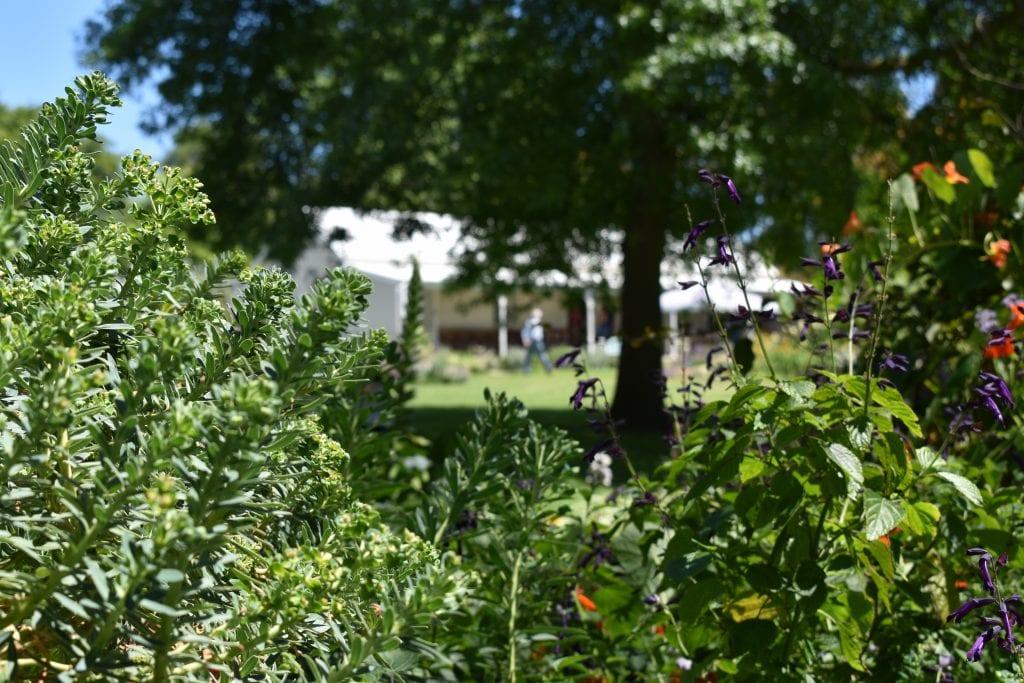 avondale-open-garden-gardeners-cottage