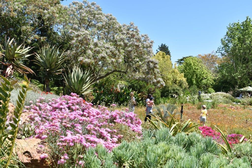 avondale-open-garden-durbanville