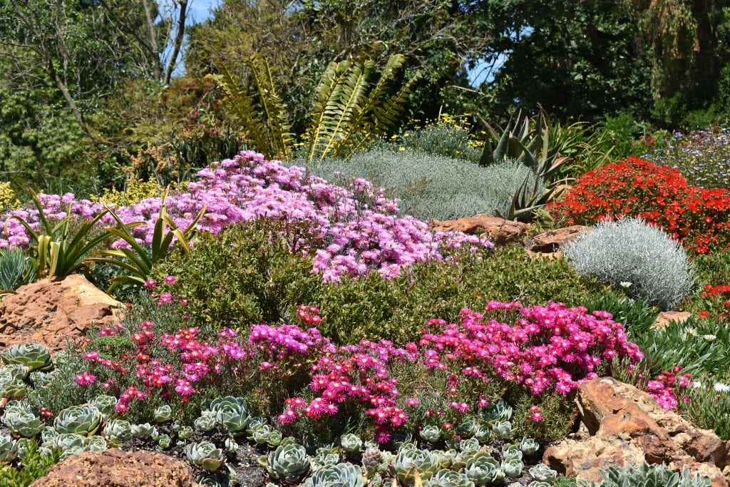 avondale-ice-plants