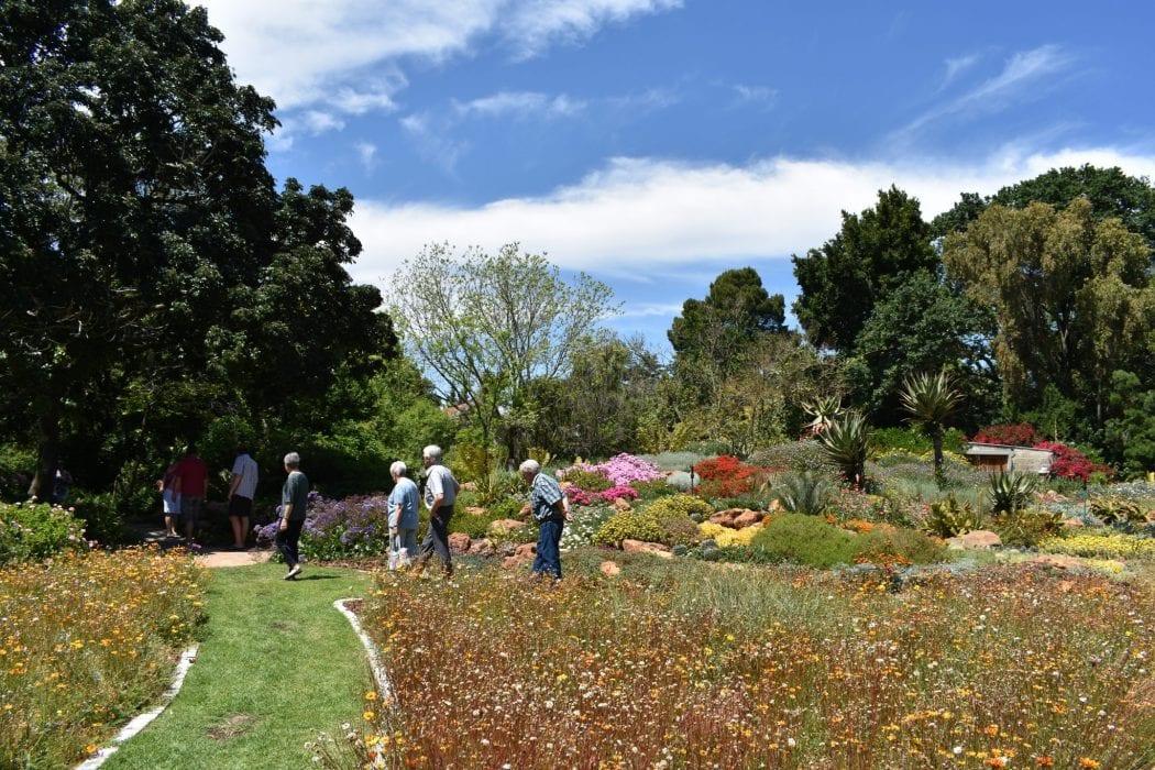 solo-travel-western-cape-avondale-open-garden
