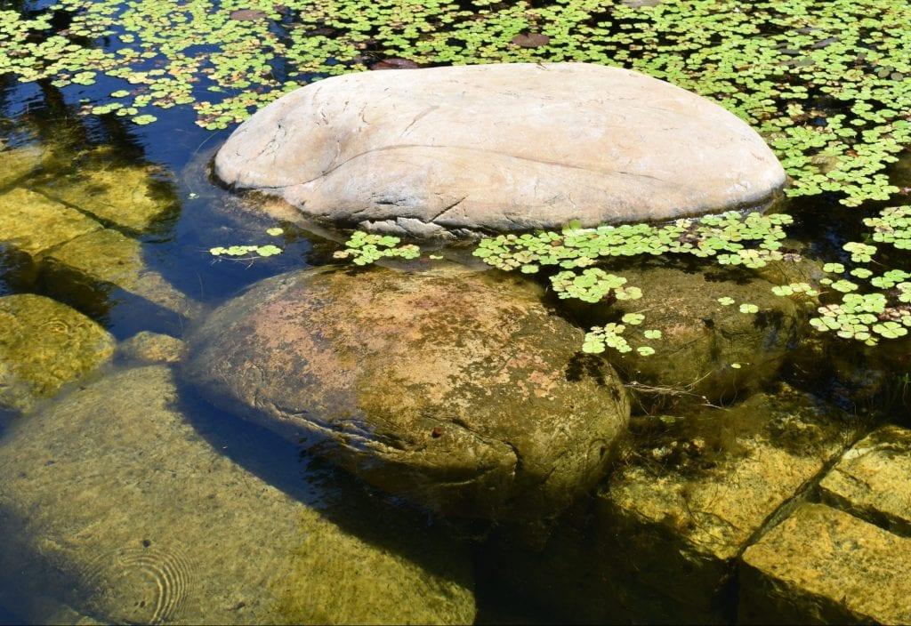 avondale-pond