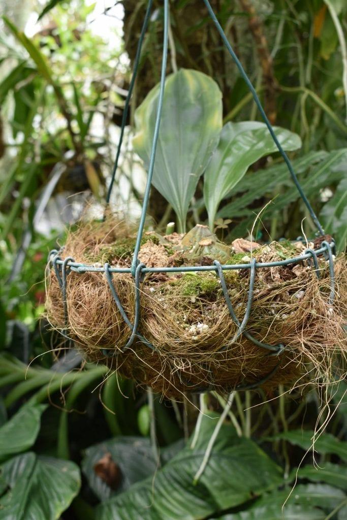 avondale-orchid-house