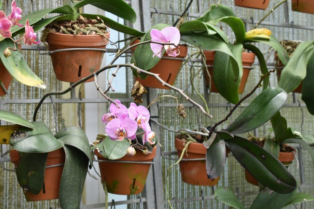 avondale-garden-orchids