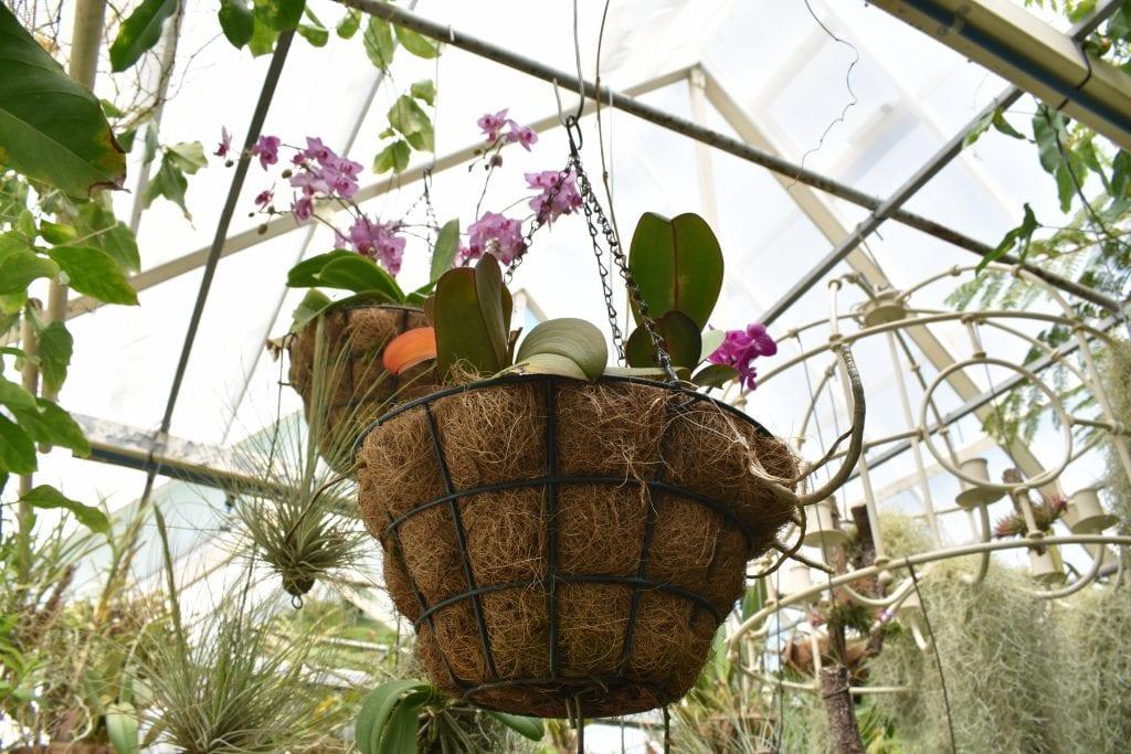 plant-avondale-garden