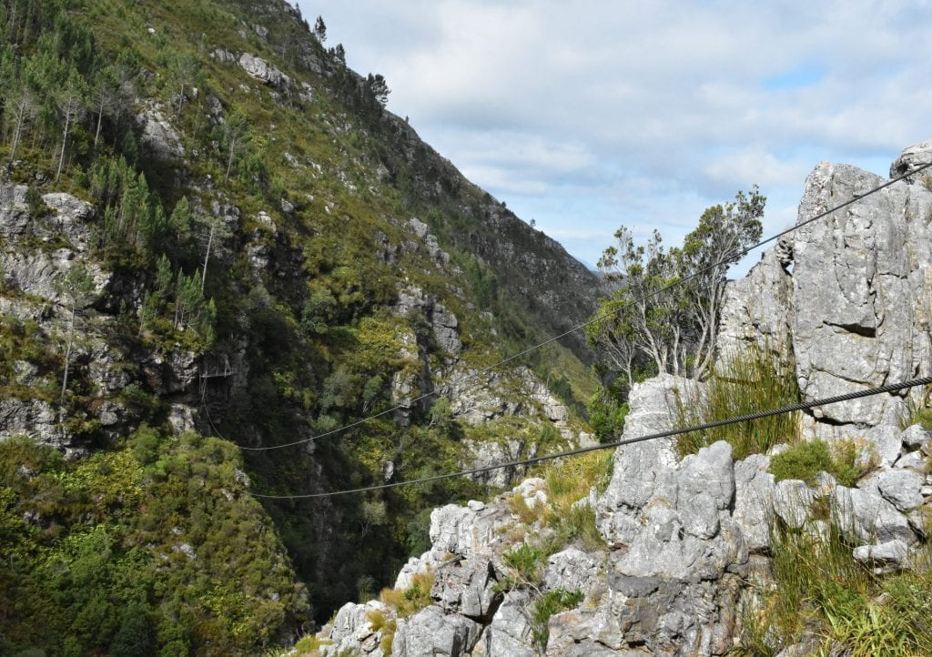 elgin-cape-canopy-tour-south-africa