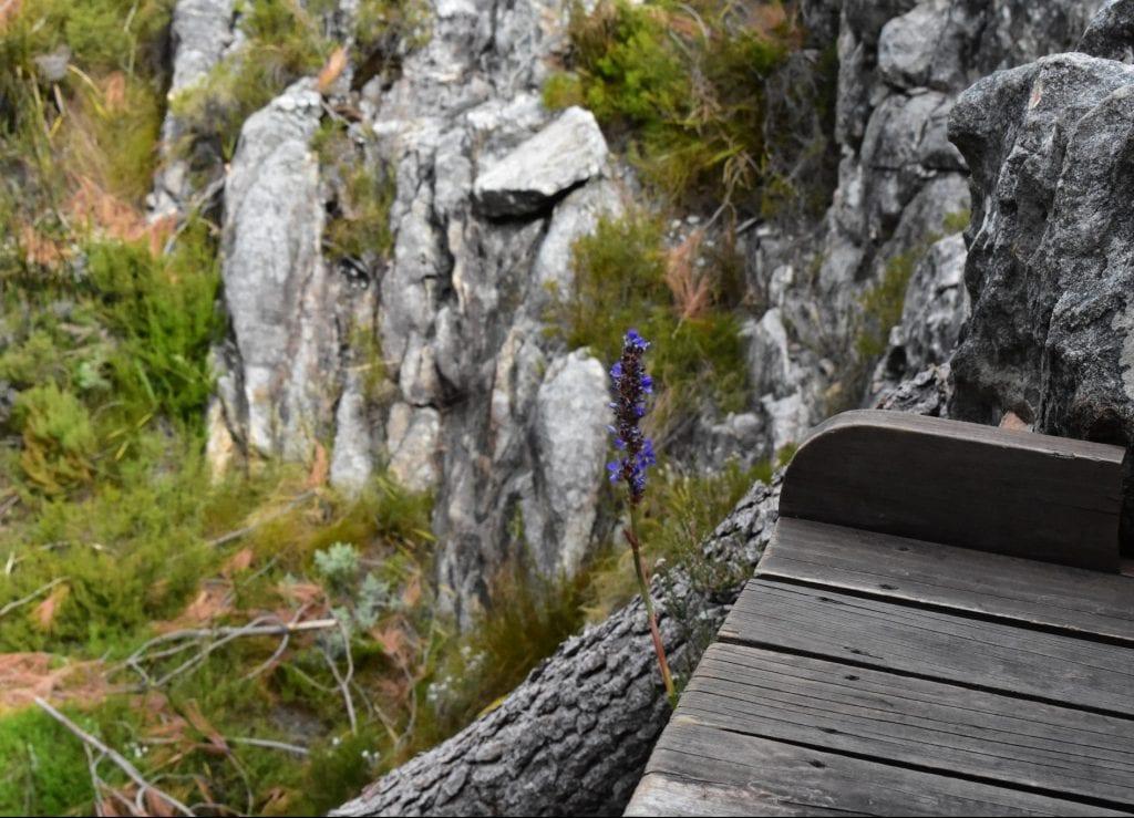 hottentot-holland-nature-reserve-elgin