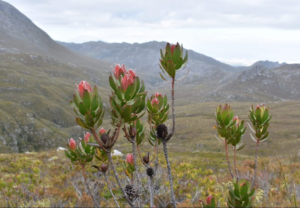 cape-canopy-tour-elgin-nature-reserve