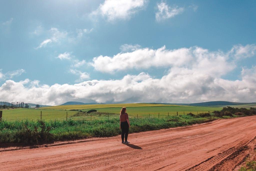 melissa-gundry-canola-fields
