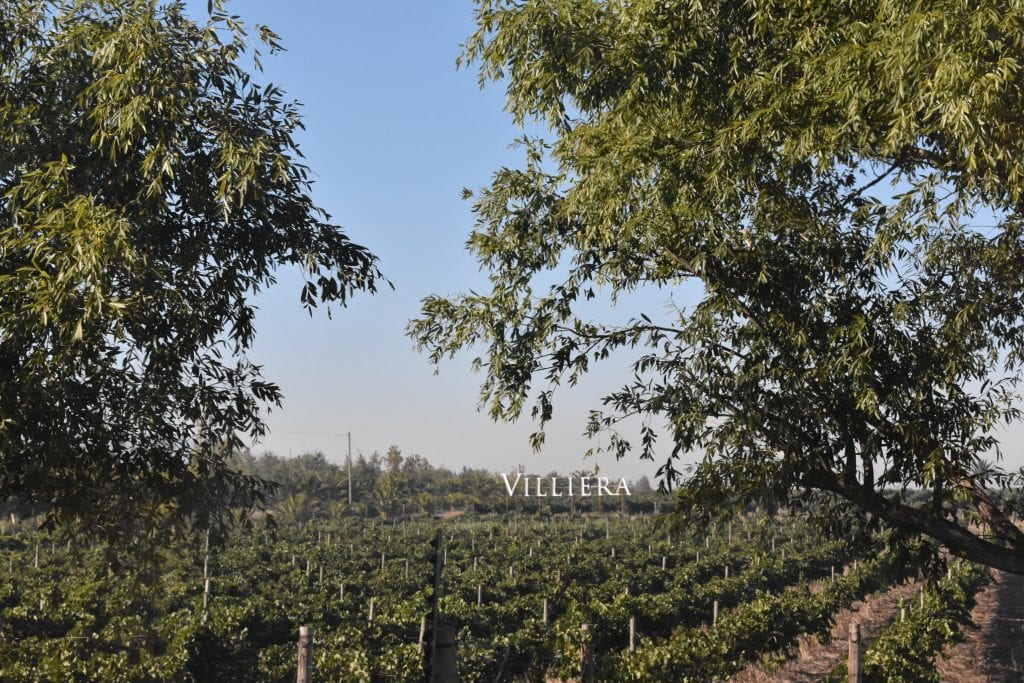 villiera-wines-sign