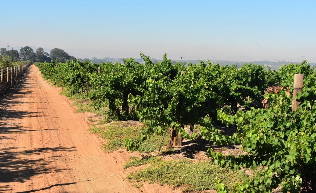 villiera-wines-vineyards