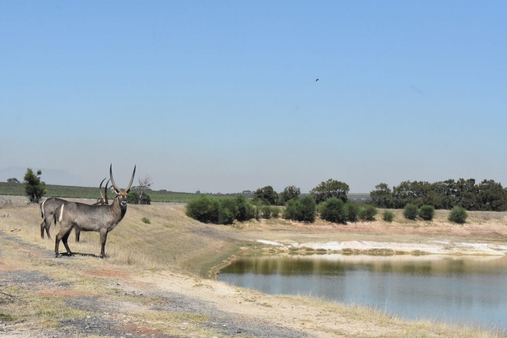 waterbuck-villiera-wines
