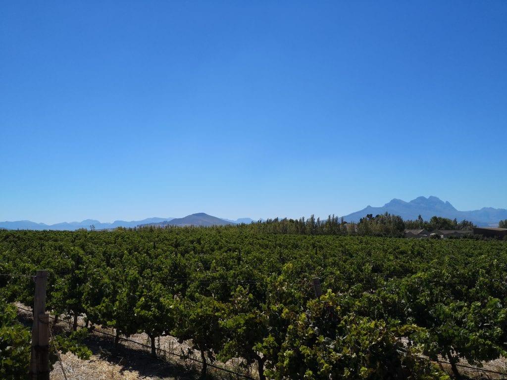 villiera-stellenbosch-wine-farm