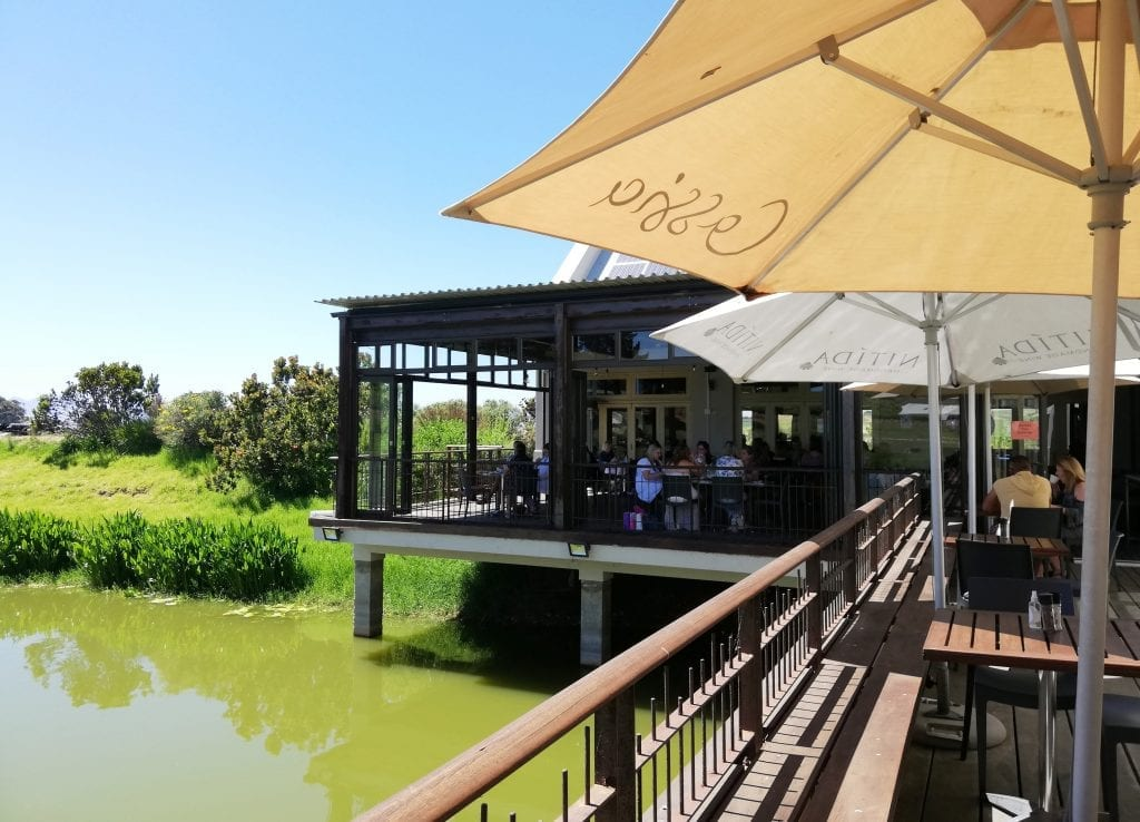cassia-at-nitida