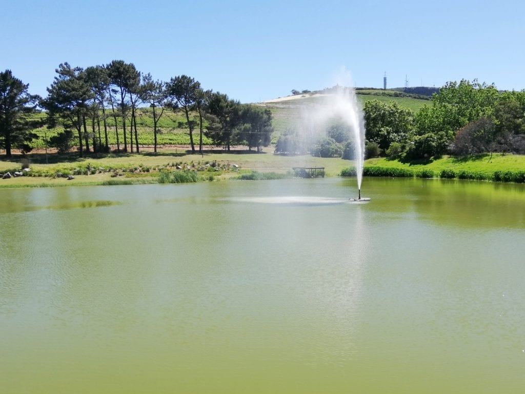 nitida-wine-estate-dam