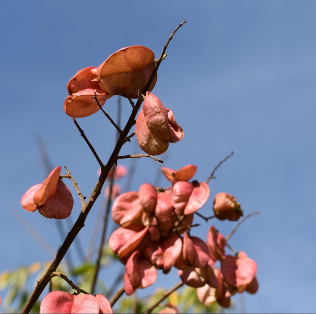 flowers-joostenberg-wine-estate