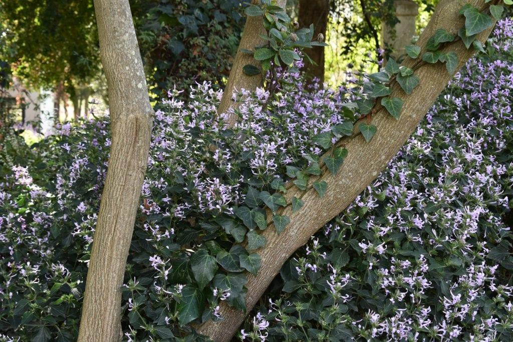 blooms-joostenberg-wine-estate-garden