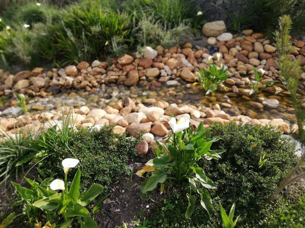hazendal-garden