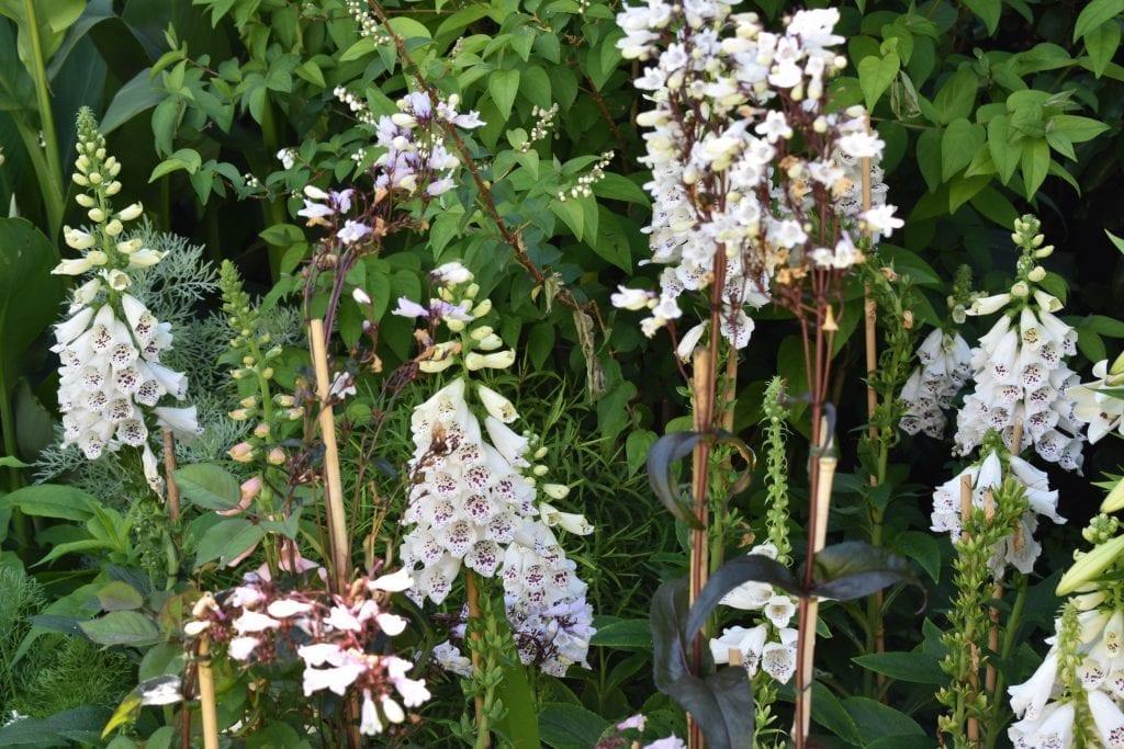 stellenberg-white-garden