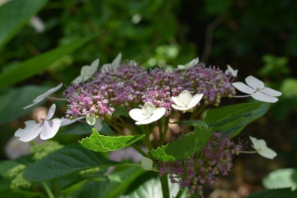 flowers-stellenberg-open-gardens